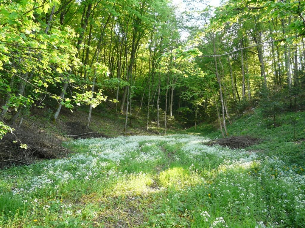 preddverje gozda (foto: osebni arhiv)